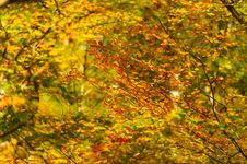 Free Beautiful Autumn Foliage Stock Images - 30779604