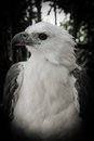Free Portrait Of A White Eagles Head Stock Image - 30784801