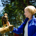 Free Close-up Of A Woman And A Captive Falcon At A Wild Bird Sanctuary. Royalty Free Stock Image - 30786506