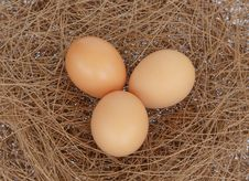 Free Eggs On Hay Nest Backgorund Royalty Free Stock Images - 30782219