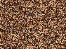 Free Leaf Pattern Stock Photo - 30784840