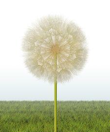 Free Dandelion Seed Head Royalty Free Stock Photography - 30784847