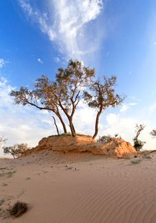 Free Heat, The Trees In A Desert Stock Photography - 30786432