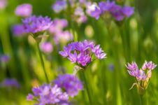 Free Summer Wildflowers Stock Photo - 30788580