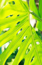 Free The Structure Of Nature Green Leaf Stock Images - 30793144