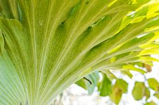 Andinum Fern Stock Photo