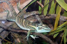 Free Lizard Stock Image - 30794901