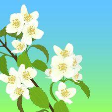 Free Vector Cherry Blossom. Royalty Free Stock Photo - 30795035