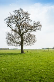 Free Budding Tree In A Rural Area In The Spring Season. Royalty Free Stock Images - 30797229