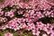 Free Mountain Flowers Royalty Free Stock Image - 30793536