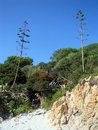 Free Cala Liberotto Paradise! Stock Photo - 3089160
