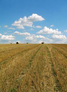 Free Field & Blue Sky Stock Photos - 3080063