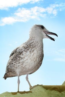 Free Seagull Stock Image - 3080201
