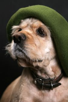 Free Dog In Green Hat Stock Photography - 3080312