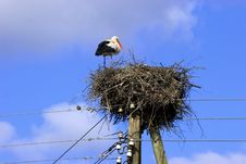 White Stork In Nest Royalty Free Stock Photo