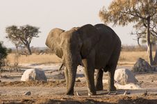 Free Elephant At A Waterhole Royalty Free Stock Photography - 3080997