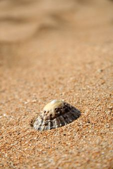 Free A Limpet On A Sandy Beach Stock Photography - 3081002