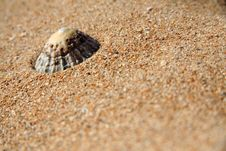 Free A Limpet On A Sandy Beach Stock Photos - 3081023
