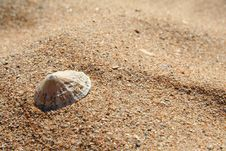 Free A Limpet On A Sandy Beach Stock Photography - 3081032