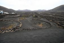 Free Volcanic Vineyard Royalty Free Stock Photo - 3081845