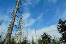 Free Dead Trees On A Blue Sky Royalty Free Stock Photo - 3082065