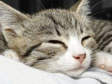 Free Little Kitten Sleeping Royalty Free Stock Photos - 3082628