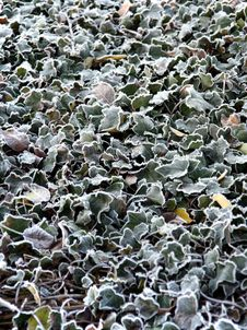 Free Frozen Leaves. Stock Photos - 3084553