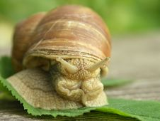 Funny Snail Royalty Free Stock Photos