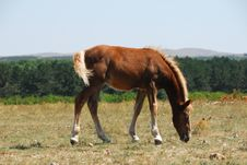 Free Horse On Pasture Stock Photography - 3085512