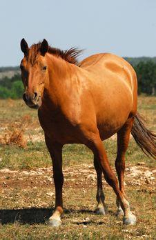 Free Horse On Pasture Stock Photos - 3085513