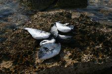 Free Fresh Fish Royalty Free Stock Image - 3085516