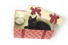 Free Black Kitten In A Gift Box Royalty Free Stock Images - 3085929