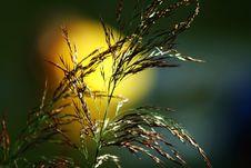 Free Grass Royalty Free Stock Image - 3085996