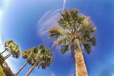 Free Palms In The Sky Royalty Free Stock Photos - 3086008