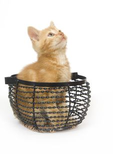 Free Yellow Kitten In Wire Basket Stock Images - 3086034