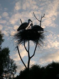 Free Storks Stock Photos - 3087093