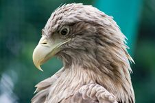 Free Feathery Predator Royalty Free Stock Images - 3087209