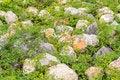 Free Rack Whit Plants Stock Photo - 30809280
