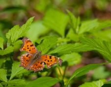 Free Butterfly Royalty Free Stock Photos - 30802568