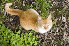 Free Rusty Cat Royalty Free Stock Image - 30803966