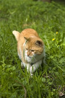 Free Rusty Cat Stock Photo - 30804180