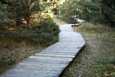 Free Wooden Walkway In The Forest Stock Photo - 30804590