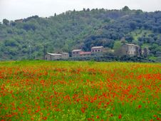 Free Italian Farm With Red Poppies Royalty Free Stock Photos - 30811358