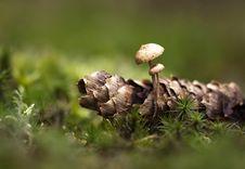 Free Autumn Mushroom Stock Photography - 30815362