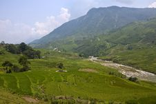 Free Paddy Fields In A Valley Royalty Free Stock Photo - 30820095