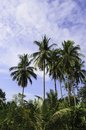 Free Coconut Tree Royalty Free Stock Images - 30831249