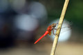 Free Dragonfly Stock Images - 30831594
