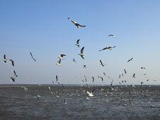 Free Seagulls Flying Stock Photo - 30837480