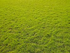 Free Lawn In Light Stock Photography - 30839962