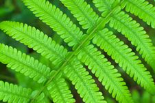 Free Green Leave Stock Photo - 30842600